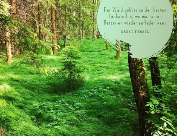 Waldbaden TCM Element Holz Leber Gallenblase Energie Achtsamkeit riechen sehen hören Selbstliebe