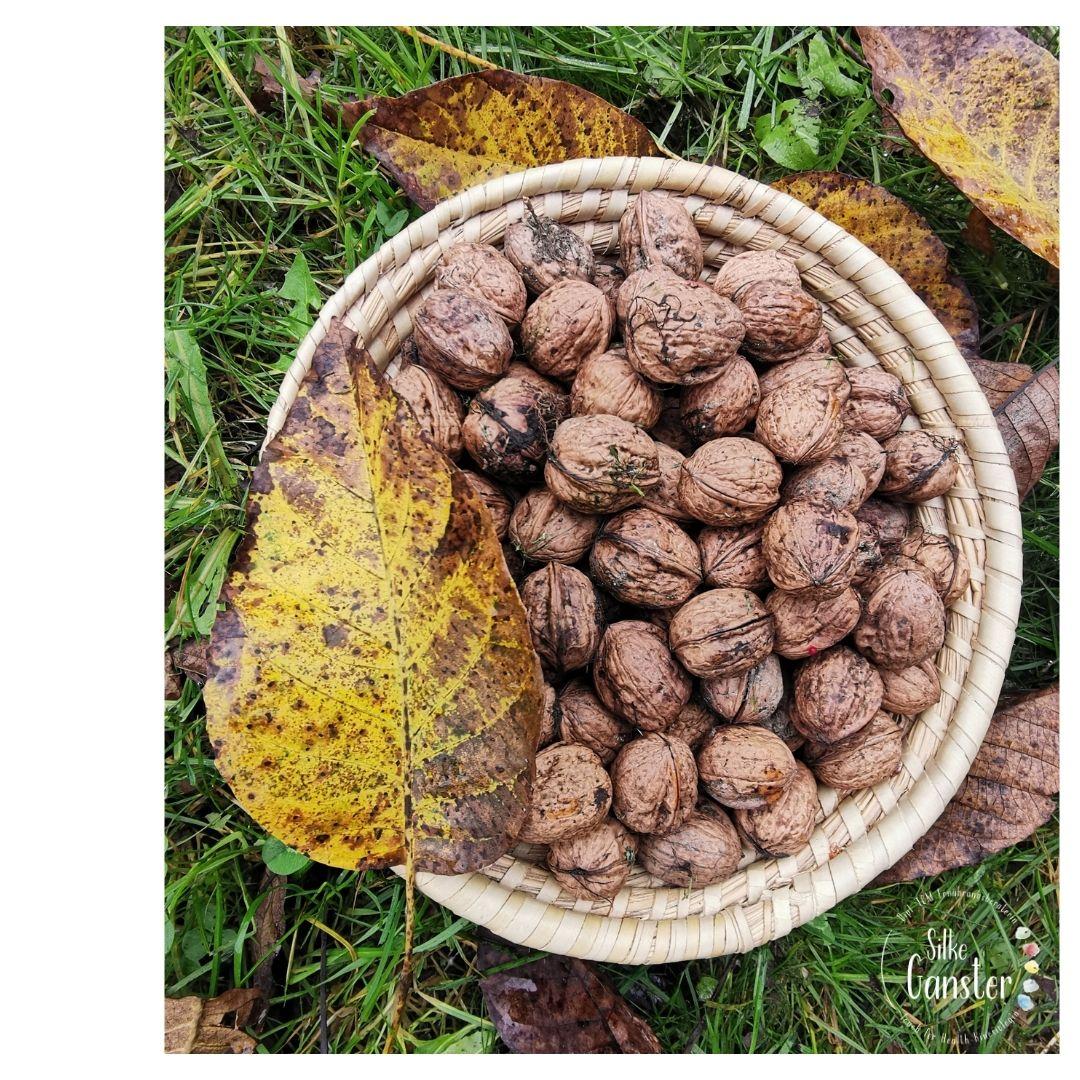Walnuss Walnüsse TCM Beratung Herbst kalte Füße Hände wärmend